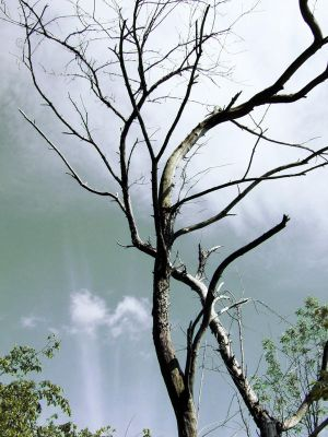 these dying limbs by WritheofWinter