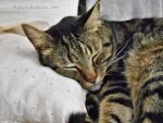 DJ Naps On His LIttle Pillow by jim88bro