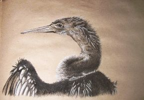 Darter 2 by Concini