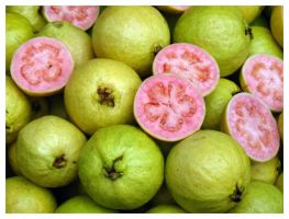pink guava by vvens