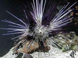 Spiny Fish by lady-warrior