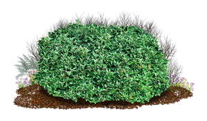 Bush 3 PNG.. by WelshDragonStockNArt
