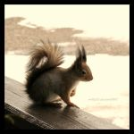 Tiny Squirrel by nnIKOO