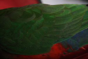 Feathers 01 by FreeakStock
