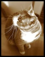 Sepia Cat by wasd