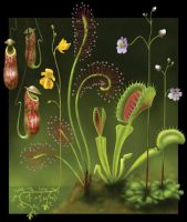 Carnivorous Plants by ccris393