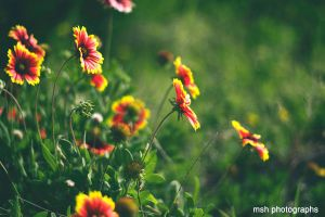 Bloom by MSH-Photography