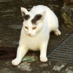 Lugano kitty by wildplaces