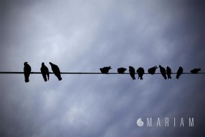 Birds on the line by velveteye