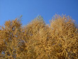 Golden trees and sky by HaruAya