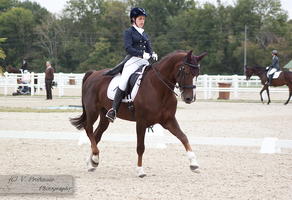 Dressage Cup_9 by CalyHoney