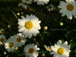 Daisies II by Resensitized