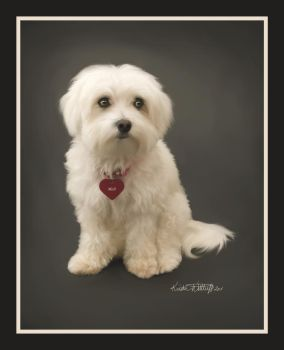 Mali the Maltese by liengod