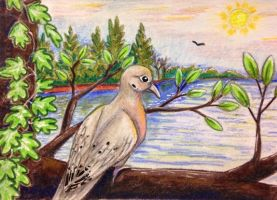 ACEO: Mourning Dove by DanielleMWilliams