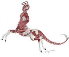 Anatomy of an Andalite 2 by SparkyArt