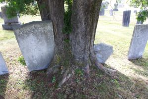 Tree consuming grave stone by OwenneiL