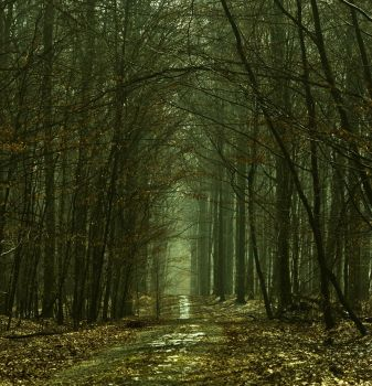 Forest From The Nature Reserve by grindz0ne