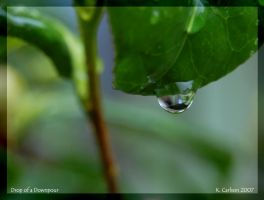 Drop of a Downpour by katherineannecarlson
