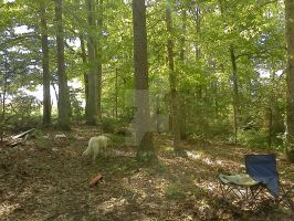 The Old Campsite 1 by dhbraley