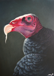Justin the Vulture by TransparentGhost