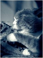 my cat 2 by D173190