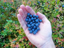 Blueberries by francis1ari