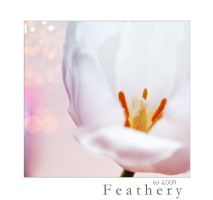feathery beauty by Holunder