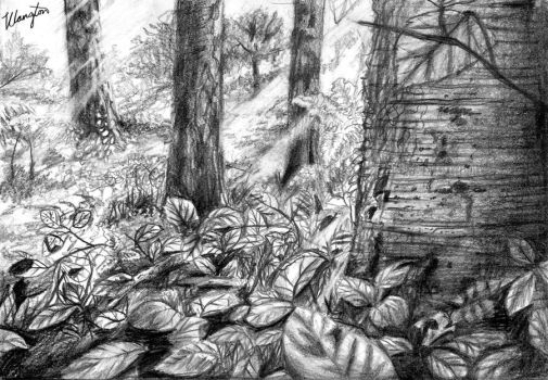 Woodland Floor   in pencil by amber-glow
