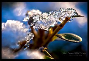 Frostiness on a Leaf by FurImmerUndEwig