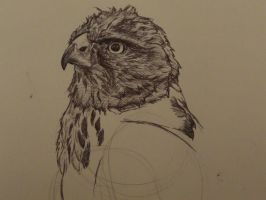 Hawk Sketch by digitalanomoly