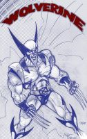 Wolverine quick sketch by PatCarlucci