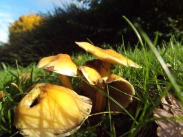 Gold amongst the green by buttercupminiatures