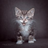 Miaou by roon1305