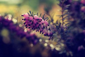 Img3605 by tigerelune