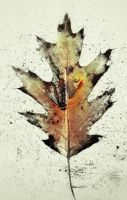 iPhoneography, Leaf on Stone by Gerald-Bostock