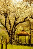 Under Blossom by LePianiste