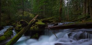 Scenes from The Pacific Northwest by coulombic