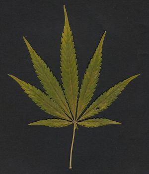 marihuana leaf by luiexs