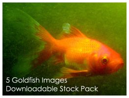 Goldfish Stock Pack by Della-Stock