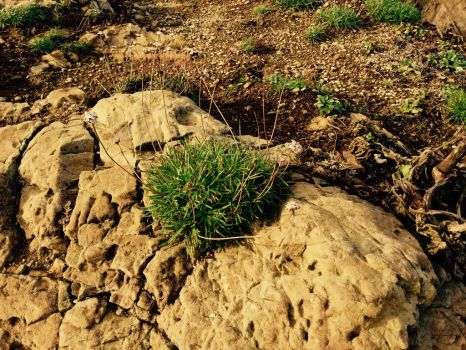Yellow Stone Grass by bluedreamsun