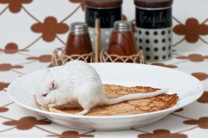 Gerbil steals Pancake by ErikTjernlund