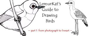 How to Draw Birds part 1 by lemurkat