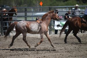 Bronc Riding 3 by EquineStockImagery