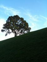 A Hill and the Lonely Tree by FlyingIsFun