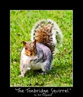 The Tonbridge Squirrel by koltregaskes