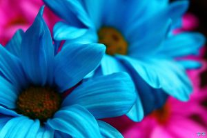 I'd Rather Be Blue by LifeThroughALens84