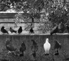 The pigeons were detectives. by devyart