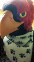 A little preview of the burd by Miukii-Asu