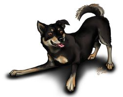 """Little Dog """"Baily"""" by WolfScribe"""