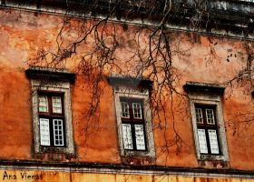 Windows.and.Trees by AnaViegas